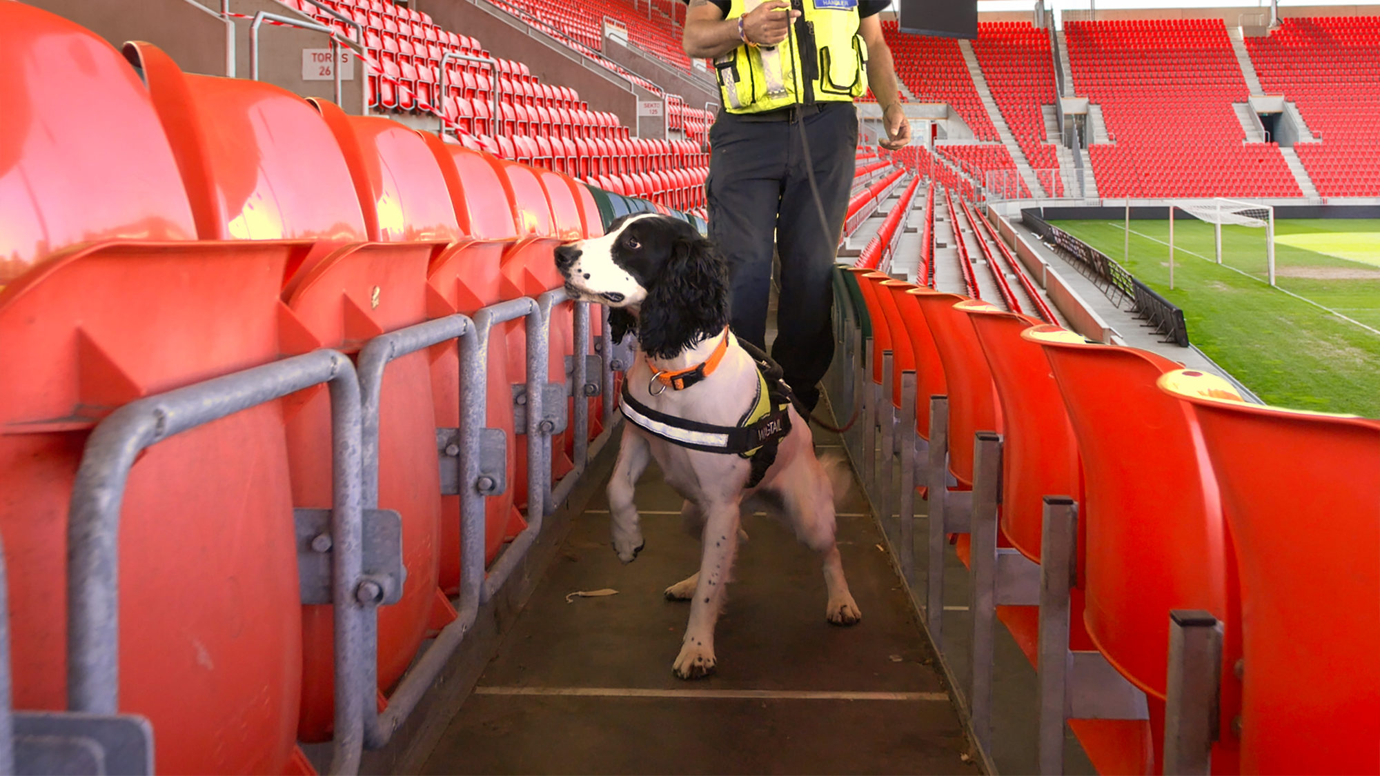 Train to be a detection dog handler with Wagtail